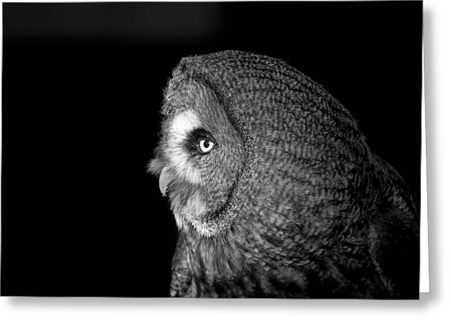 Great Grey Owl 6 Greeting Card by Simon Gregory