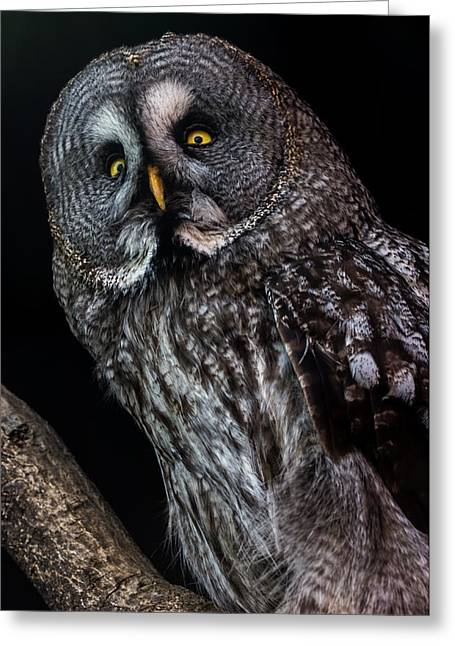 Great Grey Owl Greeting Card by Gerard Pearson