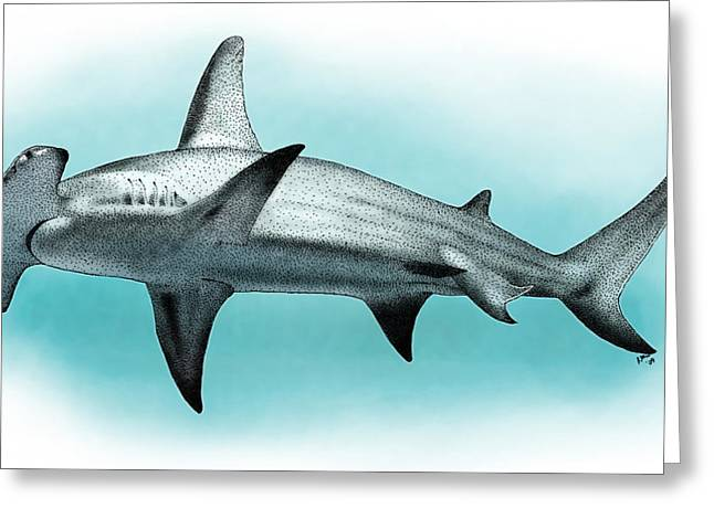 Great Hammerhead Shark Greeting Card by Roger Hall