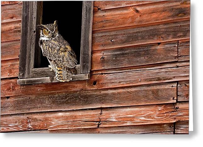 Great Horned Greeting Card