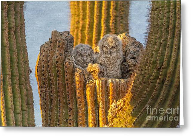 Great Horned Owl And 3 Owlets Greeting Card by Marianne Jensen