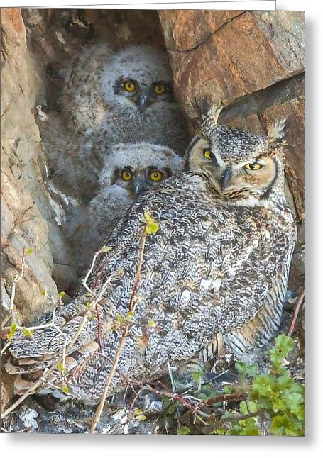 Great Horned Owl And Owlets Greeting Card