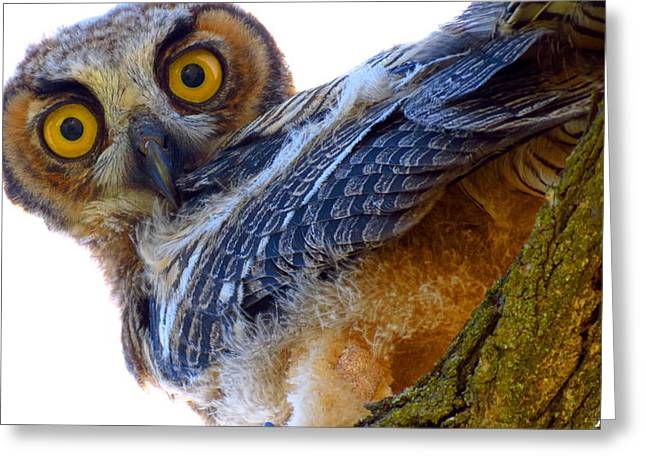 Great Horned Owl Greeting Card by Catherine Natalia  Roche