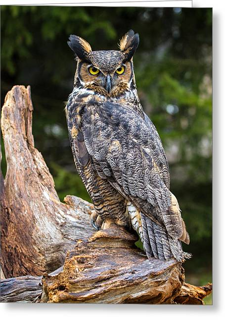 Great Horned Owl Greeting Card by Craig Brown