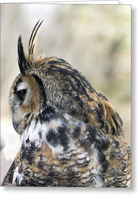 Great Horned Owl Greeting Card by Dana Moyer