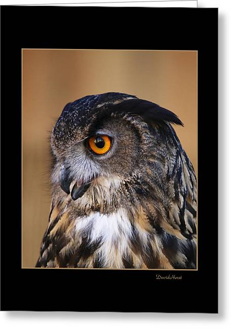 Great Horned Owl Greeting Card by David Horst