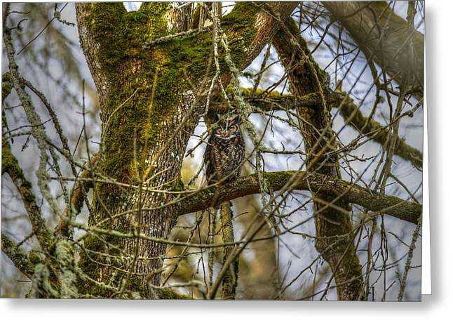 Great Horned Owl Greeting Card by David Yack