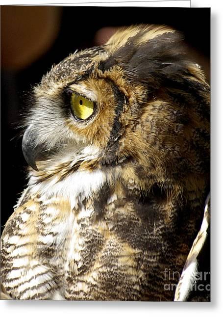 Great Horned Owl Glare Greeting Card by Liz Masoner