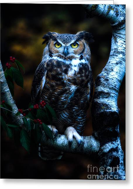 Great Horned Owl II Greeting Card by Todd Bielby