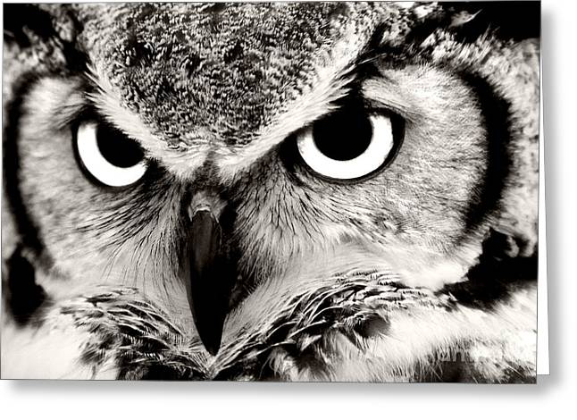 Great Horned Owl In Black And White Greeting Card