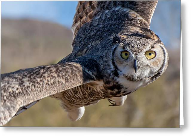 Great Horned Owl In Flight - Coming At-cha Greeting Card