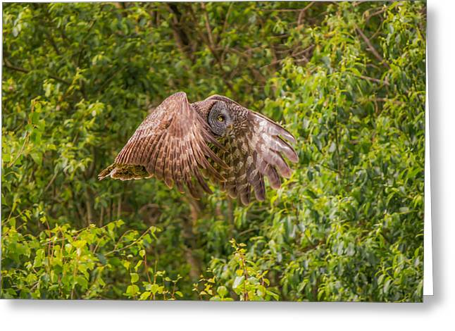 Great Horned Owl Greeting Card by Laura Bentley