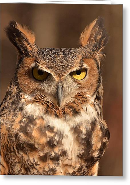 Great Horned Owl Greeting Card by Nancy Landry