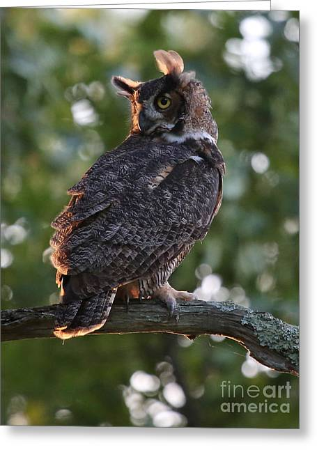 Great Horned Owl Profile Greeting Card by Marty Fancy