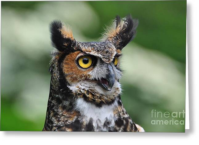 Great Horned Owl Greeting Card by Suzanne Handel