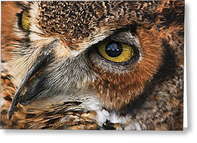 Great Horned Owl Greeting Card by Tammy Schneider