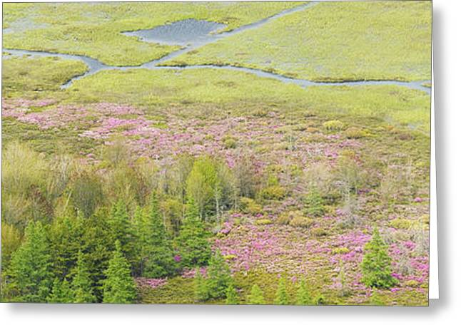 Great Meadow Flowers Blooming In Acadia National Park Greeting Card