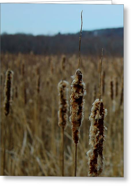 Great Meadows Greeting Card by Jeff Heimlich