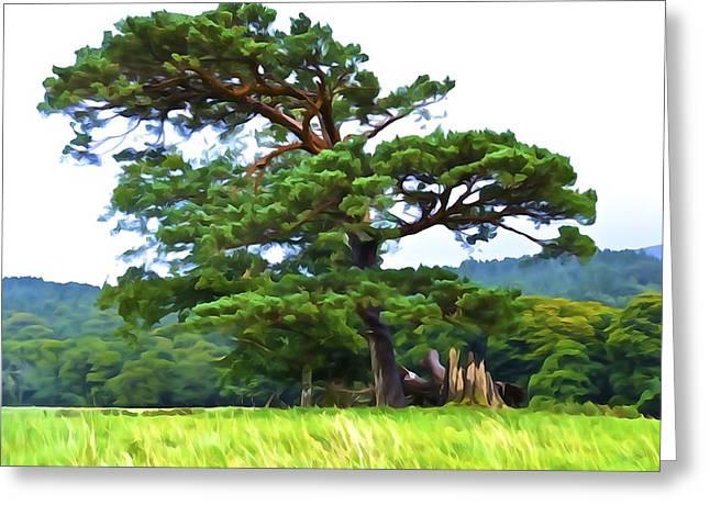 Great Pine Greeting Card