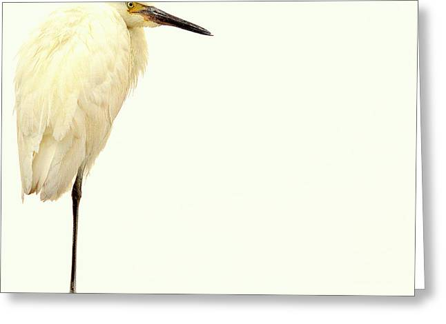 Greeting Card featuring the photograph Great Posture.. by Al  Swasey