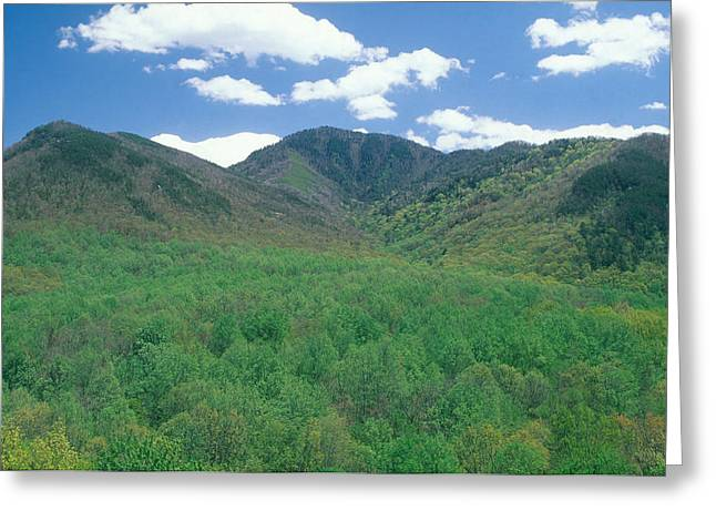 Great Smokey Mountains National Park, Tn Greeting Card by James Steinberg
