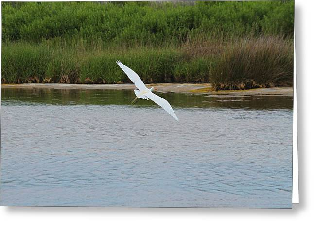 Great White Egret 25 Greeting Card by Cathy Lindsey