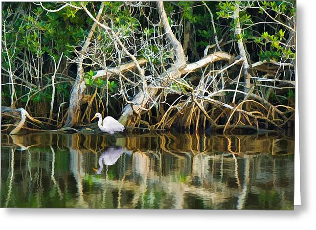 Great White Egret And Reflection In Swamp Mangroves Greeting Card