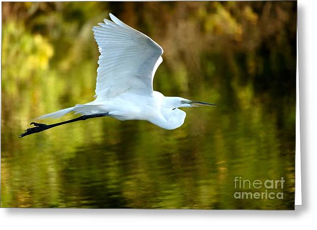 Great White Egret At Sunset Greeting Card by Sabrina L Ryan