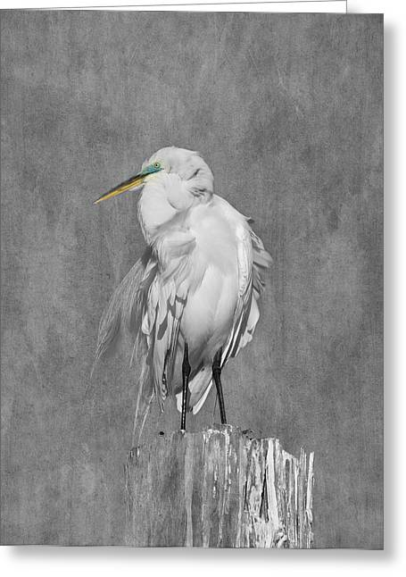Great White Egret Greeting Card by Kim Hojnacki