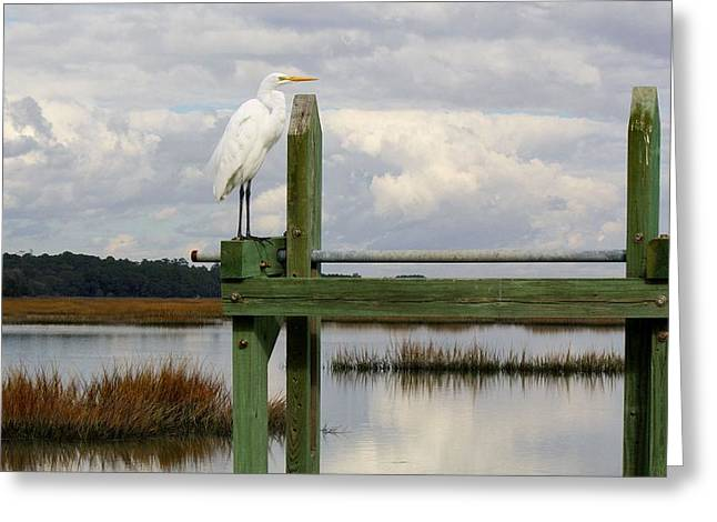 Great White Egret On The Marsh Greeting Card by Paulette Thomas