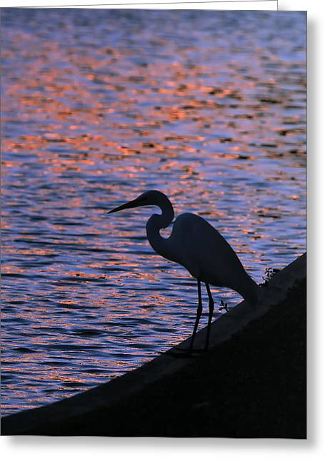 Great White Egret Silhouette  Greeting Card