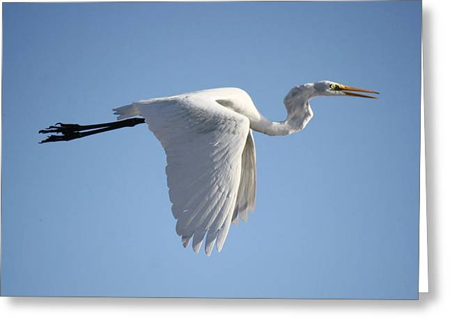 Great White Egret Wings Down Greeting Card by Paulette Thomas