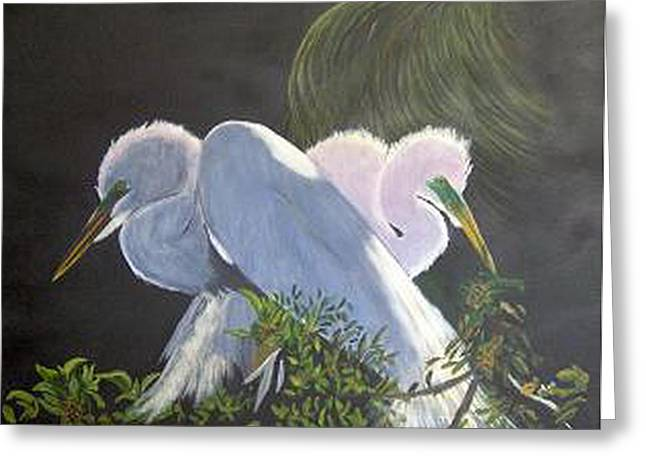 Great White Egrets Greeting Card by Catherine Swerediuk