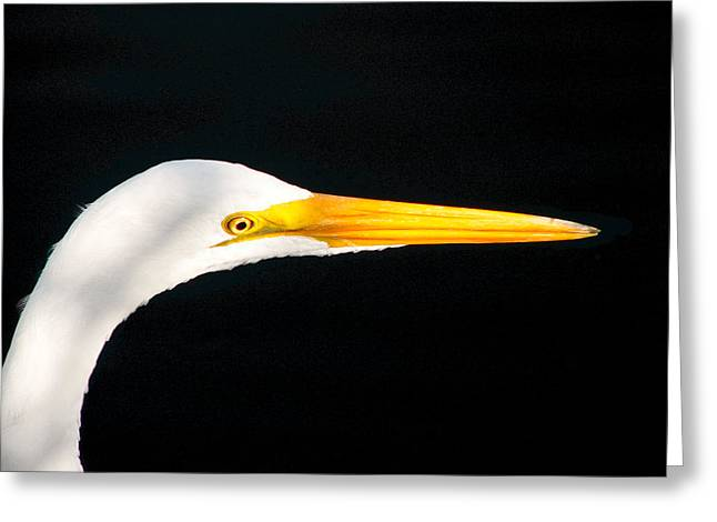 Great White Headshot. Merritt Island N.w.r. Greeting Card