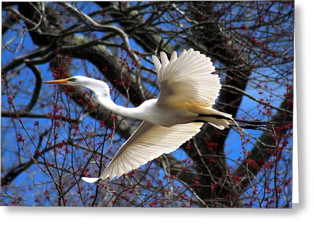 Great White Heron Islip New York Greeting Card