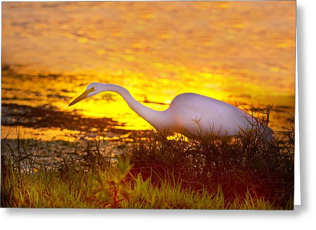 Great White Sunset Greeting Card by Mark Andrew Thomas