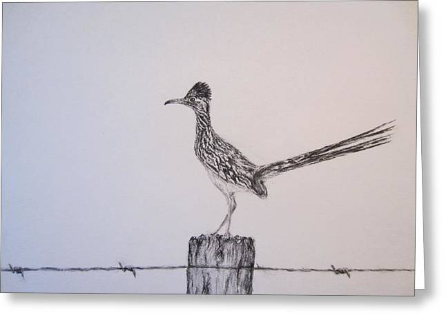 Greater Texas Roadrunner Greeting Card by Currie Smith