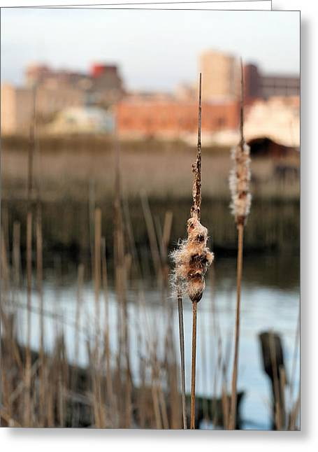 Greater Wilmington  Greeting Card by JC Findley