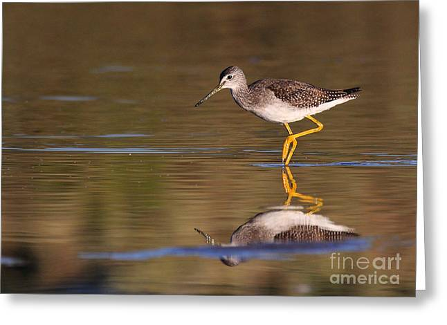 Greater Yellow Legs Greeting Card by Ruth Jolly