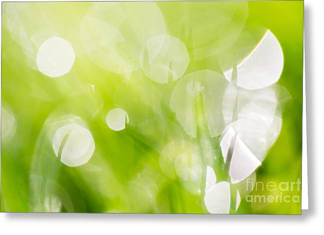 Green Abstract - Dewdrops In The Sunlit Grass 2 Greeting Card by Natalie Kinnear
