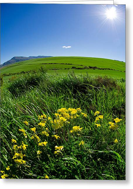 Green Acres Greeting Card by Aaron Bedell