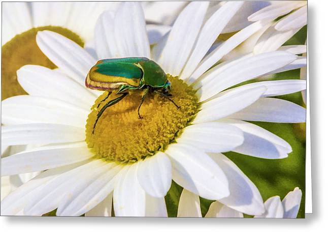 Greeting Card featuring the digital art Green And Gold Beetle by Photographic Art by Russel Ray Photos