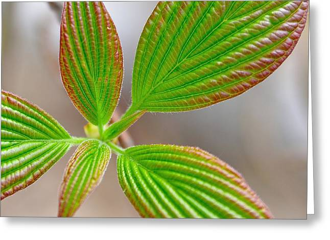 Green And Red Leaves Greeting Card by Todd Soderstrom