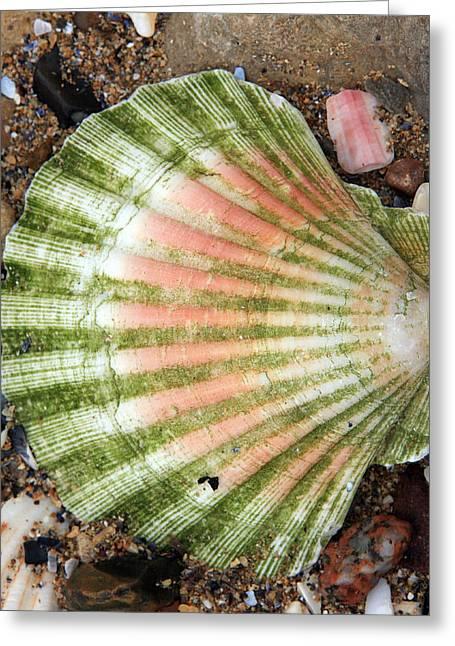 Green And Red Seashell Greeting Card by Aidan Moran