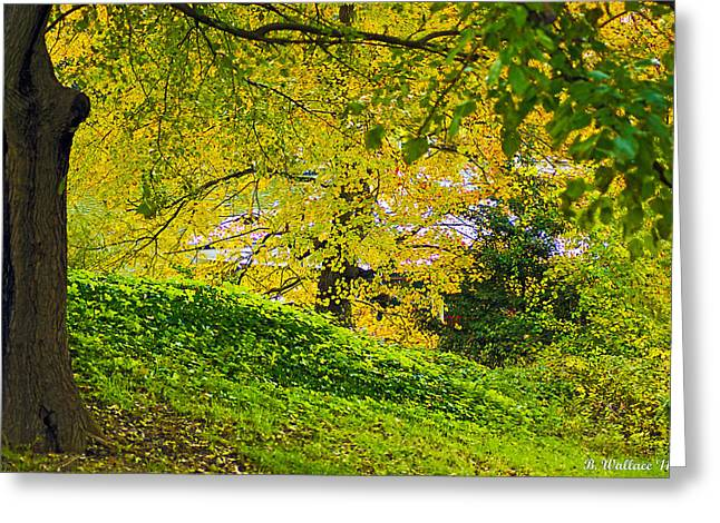 Green And Yellow Greeting Card by Brian Wallace