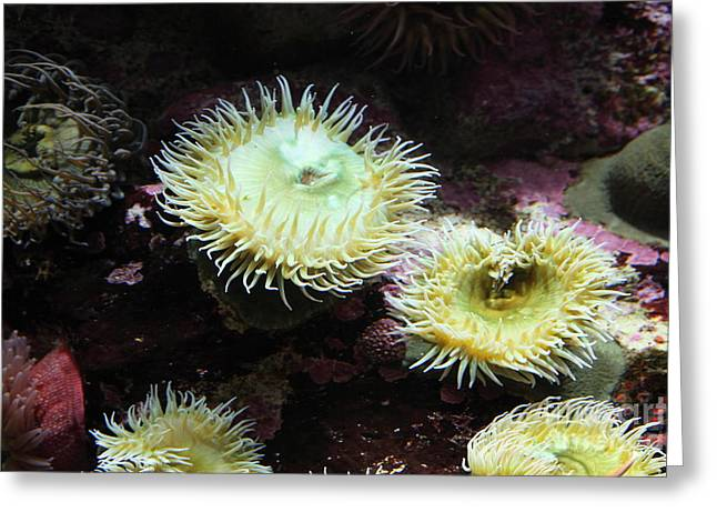 Green Anemone 5d24898 Greeting Card