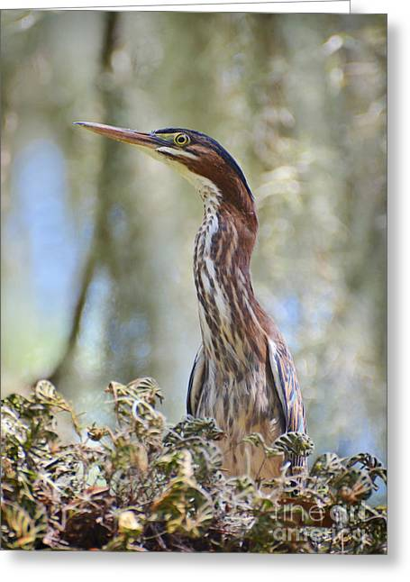 Greeting Card featuring the photograph Green Backed Heron In An Oak Tree by Kathy Baccari