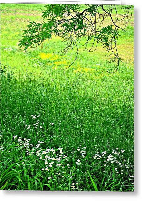 Green Greeting Card by Beverly Hammond