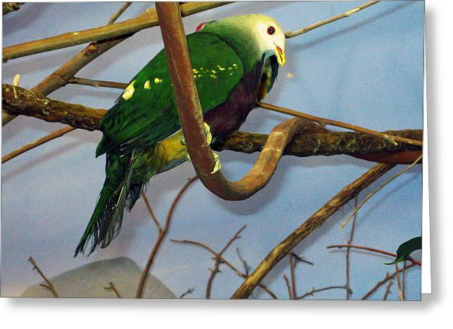 Green Bird Greeting Card by Larry Stolle
