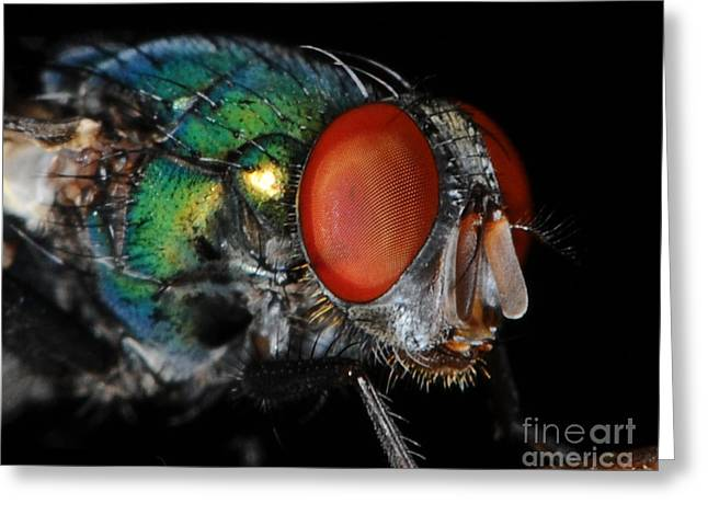 Green Bottle Fly Greeting Card